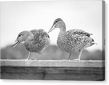 Quack Quack Canvas Print