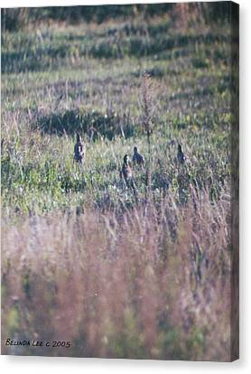Canvas Print featuring the photograph Quail Family On The Run by Belinda Lee