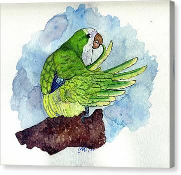 Quaker Parakeet Bird Portrait   Canvas Print by Olde Time  Mercantile