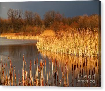 Quakertown Marsh Before Spring Storm Canvas Print