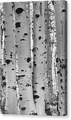 Quaking Aspen Zion National Park Canvas Print