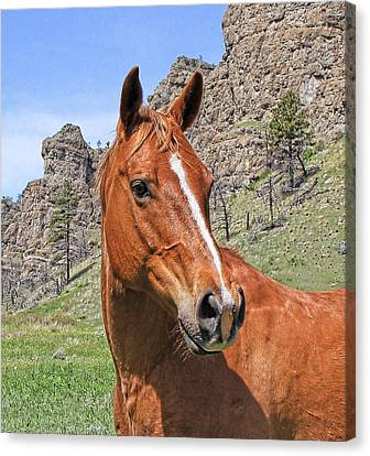 Quarter Horse Portrait Montana Canvas Print