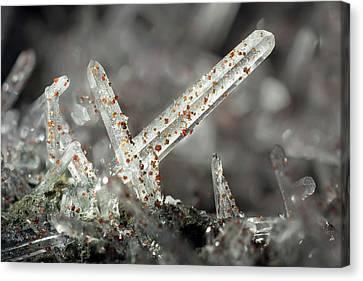 Silica Canvas Print - Quartz Needle Crystals by Dr Juerg Alean