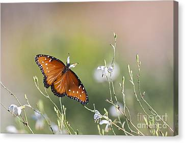 Canvas Print featuring the photograph Queen In Morning Light by Ruth Jolly