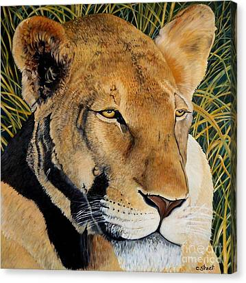 Queen Of The African Savannah Canvas Print by Caroline Street