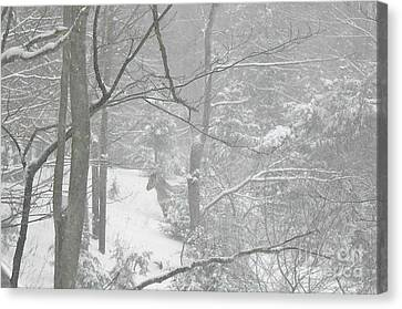 Querida In The Snow Storm Canvas Print by Patricia Keller