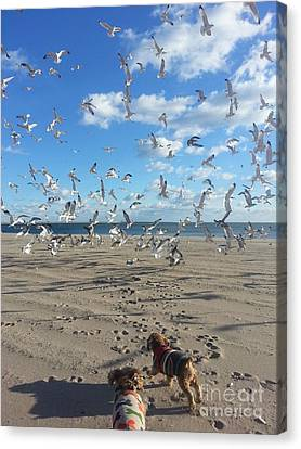 Flying Seagull Canvas Print - Quick Fly Away by John Telfer