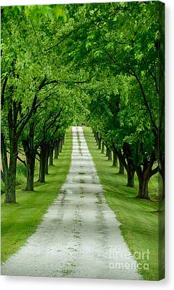 Quiet Path Between Trees Canvas Print