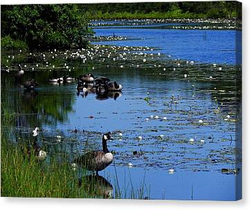 Quiet Reflections Canvas Print by Allen Beilschmidt