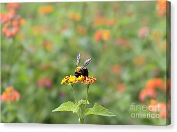 Canvas Print featuring the photograph Quiet Time by Geraldine DeBoer