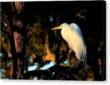 Quiet Time In The Woodland Canvas Print
