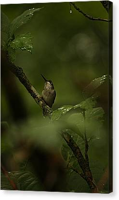 Canvas Print featuring the photograph Quietly Waiting by Tammy Schneider