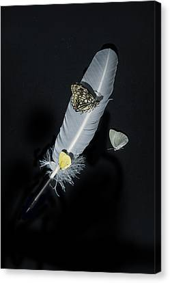 Quill With Butterflies Canvas Print by Joana Kruse