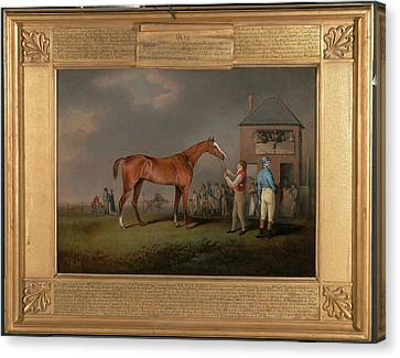 Quiz, After His Last Race At Newmarket Portrait Of `quiz Canvas Print by Litz Collection