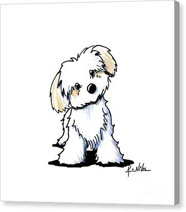 Quizzical Havanese Canvas Print by Kim Niles