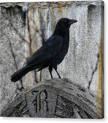 R Is For Raven Canvas Print by Gothicrow Images