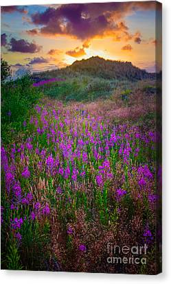 Raabjerg Fireweeds Canvas Print by Inge Johnsson
