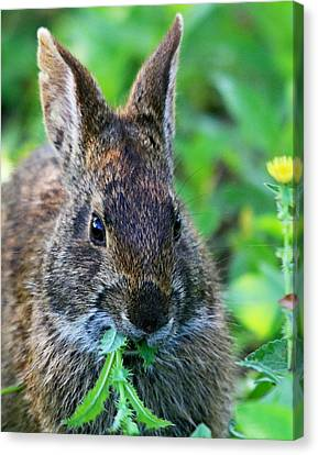 Rabbit Food Canvas Print