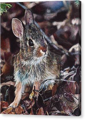 Rabbit In The Woods Canvas Print by Joshua Martin