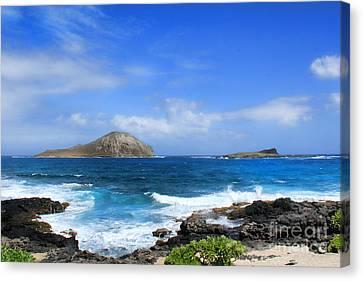 Rabbit Manana Island Oahu Hawaii Canvas Print