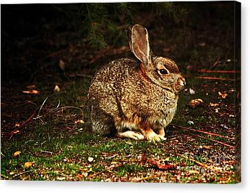 Canvas Print featuring the photograph Rabbit  by Marjorie Imbeau