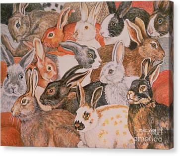 Rabbit Spread Canvas Print by Ditz