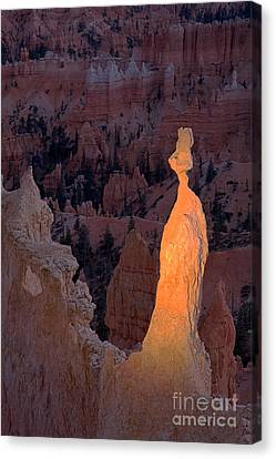 Rabbit Sunset Point Bryce Canyon National Park Canvas Print