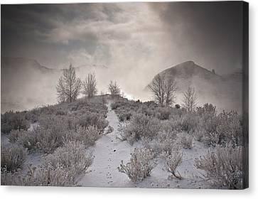 Rabbit Tracks Canvas Print by Michael Van Beber