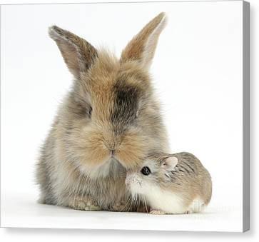 Rabbit With Roborovski Hamster Canvas Print