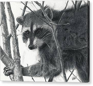 Raccoon - Charcoal Experiment Canvas Print by Joshua Martin