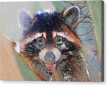 Raccoon Face Canvas Print by David Lee Thompson