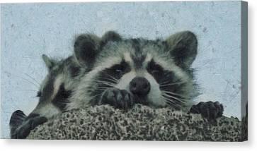 Raccoons Painterly Canvas Print by Ernie Echols