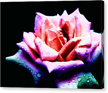 Rachel's Rose Canvas Print