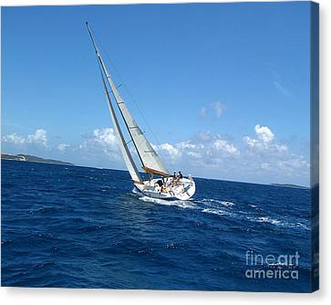 Racing At St. Thomas 2 Canvas Print by Tom Doud