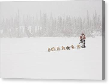 Racing Through The Falling Snow Canvas Print by Tim Grams