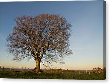 Raddon Hill Top Tree Canvas Print by Pete Hemington