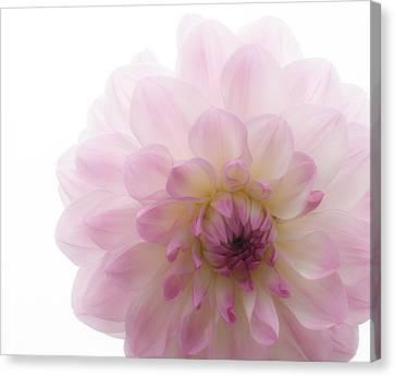 Radiant Bloom Canvas Print