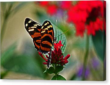 Radiant Butterfly Canvas Print