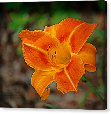 Canvas Print featuring the photograph Radiant Orange by Linda Brown