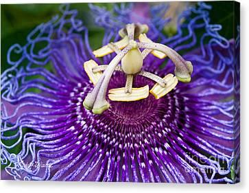 Radiant Passiflora Canvas Print