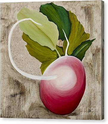 Canvas Print featuring the painting Radish by Stuart Engel