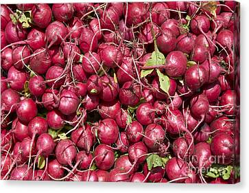 Farm Stand Canvas Print - Radish by Tony Cordoza
