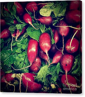 Radishes Canvas Print by Amy Cicconi