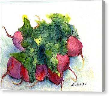 Canvas Print featuring the painting Radishes by Sandy Linden