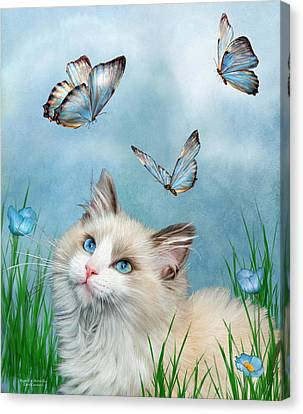 Ragdoll Kitty And Butterflies Canvas Print