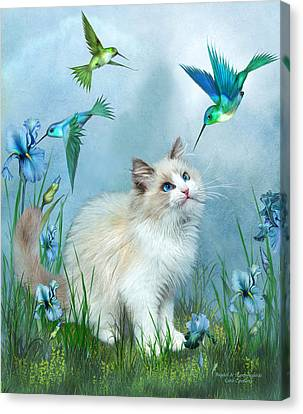 Ragdoll Kitty And Hummingbirds Canvas Print