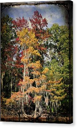 Raggedy Bayou Canvas Print by Lana Trussell