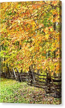 Split Rail Fence Canvas Print - Rail Fence Fall Color by Thomas R Fletcher