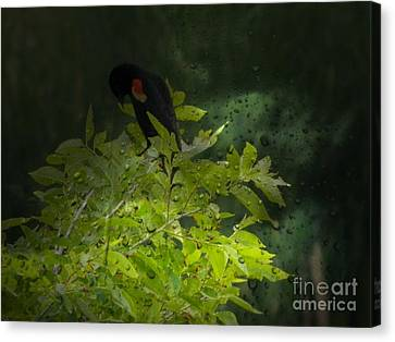 Brnch Canvas Print - Rain And The Red Wing Blackbird by Michelle Frizzell-Thompson