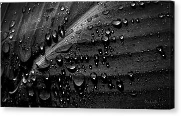 Rain Canvas Print by Bob Orsillo